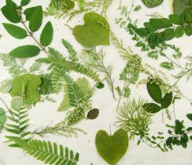 Woodland Wedding Leaves, Woodland Wedding, Green Leaves, Table Decoration