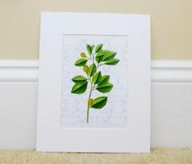 Vintage Botanical illustrations with modern printed backgrounds, Cottage Art, Botanical Art Prints, 8x10 Matted
