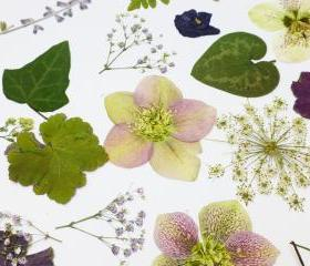 Pressed Flowers and Leaves, Romantic Mix for Special Occasion, Wedding Table Decor, Purple Flowers, White Flowers, Greenery,